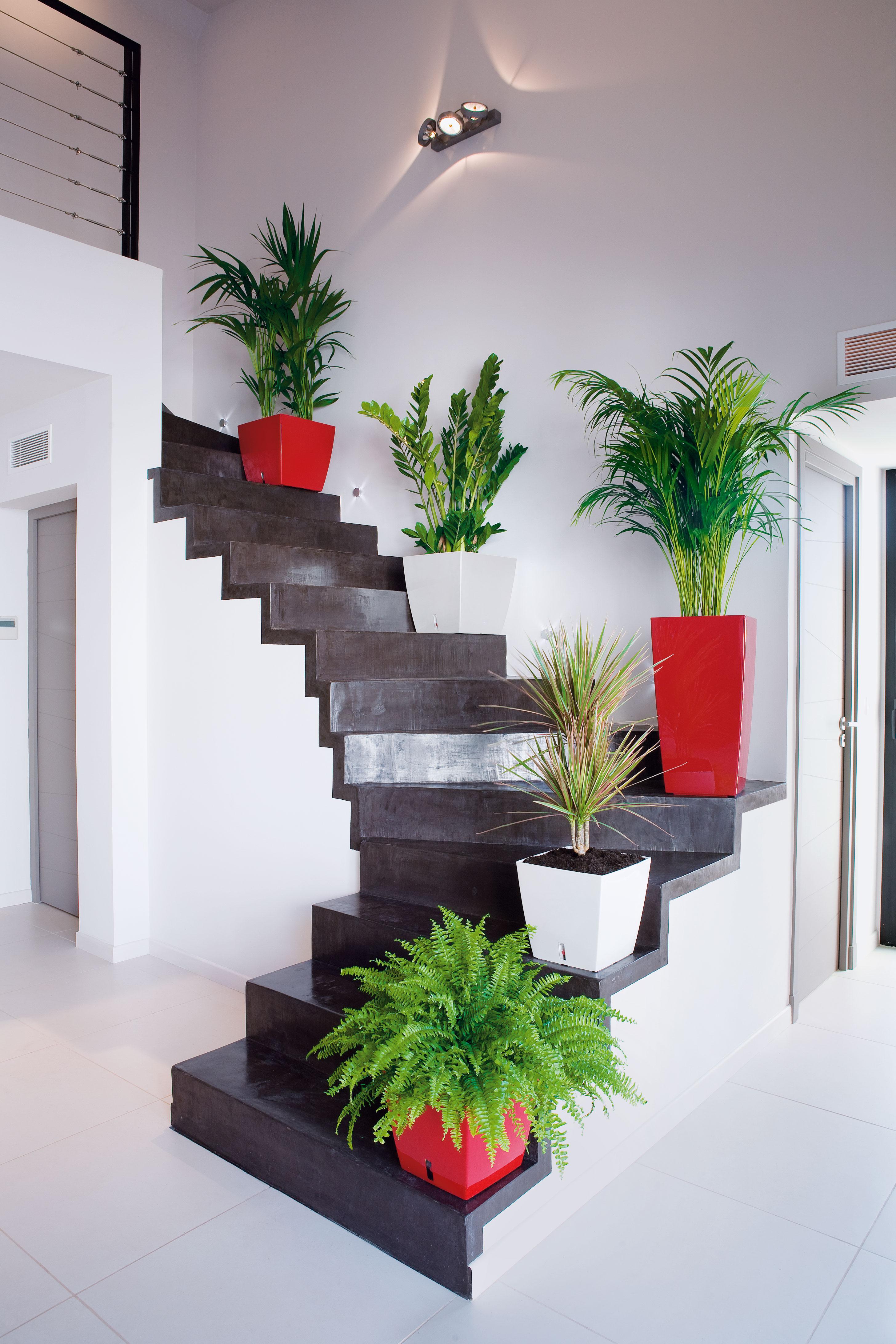 Quelles plantes choisir en harmonie avec votre int rieur for Plantes interieurs