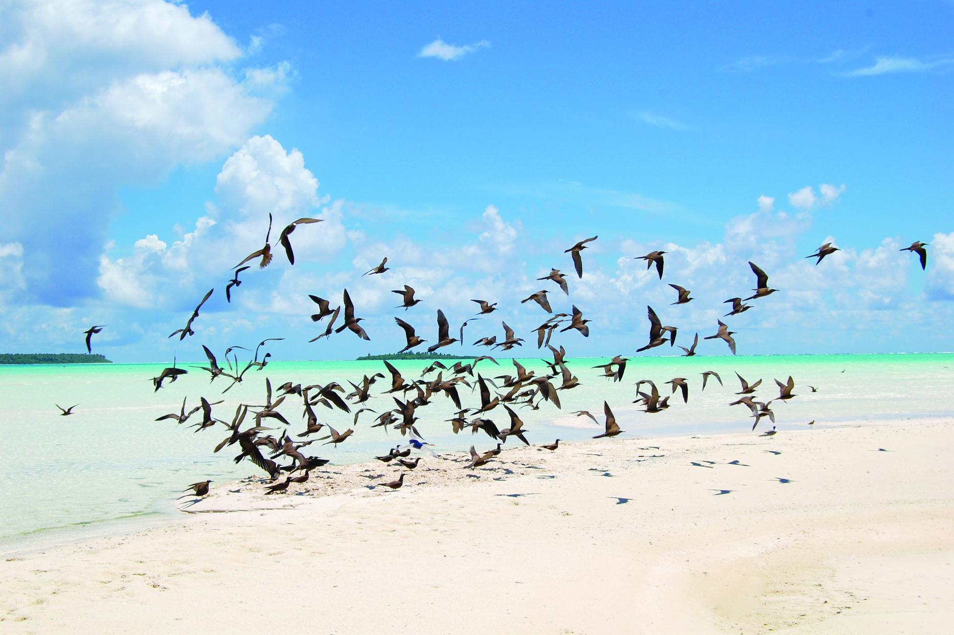 Tetiaroa The Brando Eco Hotel Luxe Birds Tmana Fauna13 2