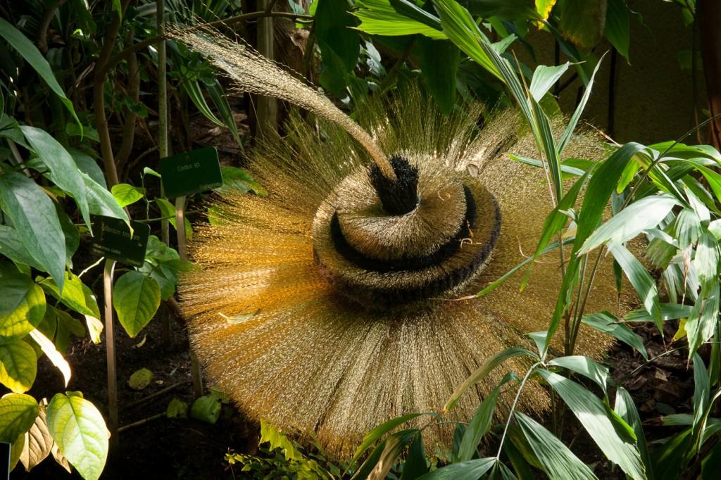 exposition-hybridations-hybride-nature-culture-grandes-serres-jardin-plantes-©yannmonel-0081