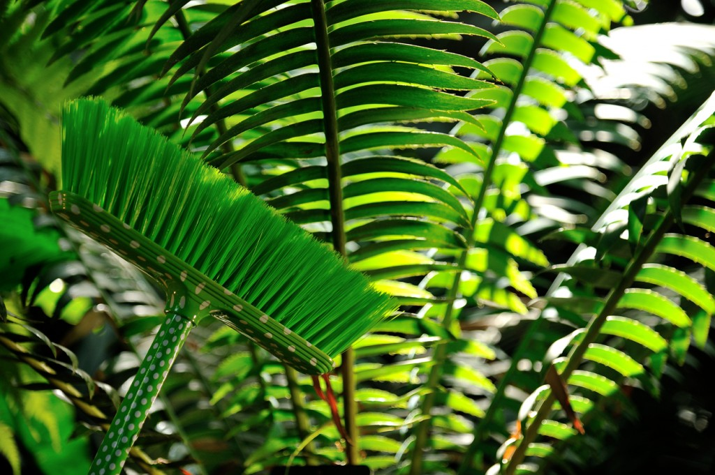 exposition-hybridations-hybride-nature-culture-grandes-serres-jardin-plantes-FGG_0617 © F-G Grandin MNHN