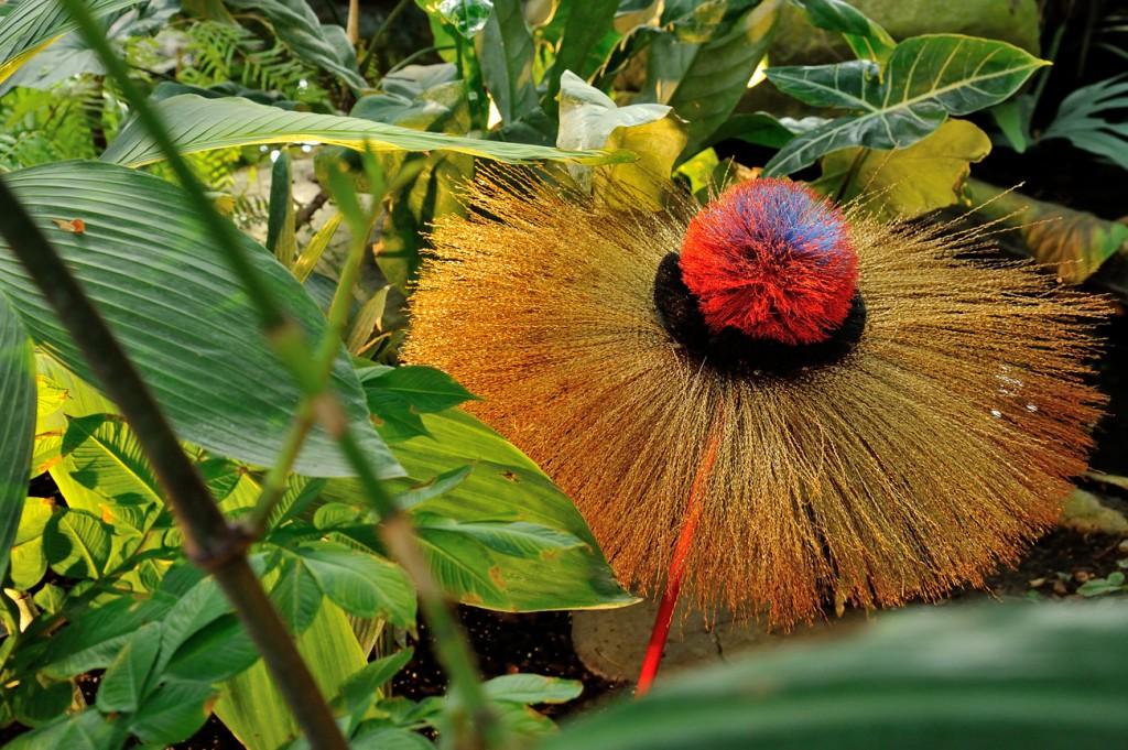 exposition-hybridations-hybride-nature-culture-grandes-serres-jardin-plantes-FGG_0660 © F-G Grandin MNHN