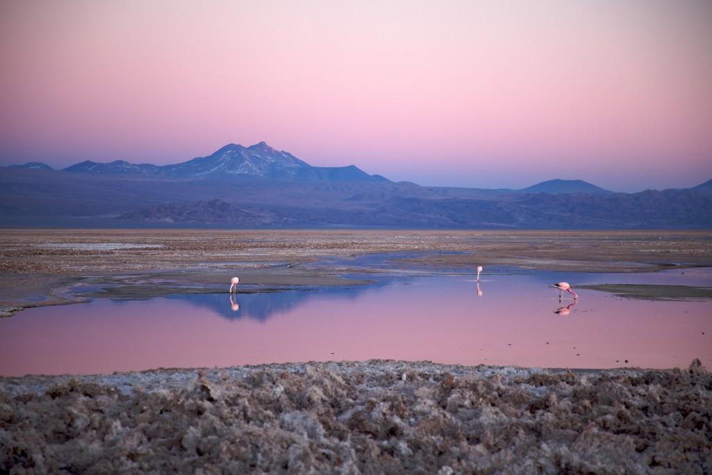 Salar de Atacama. Copyright Nicolas de Camaret.