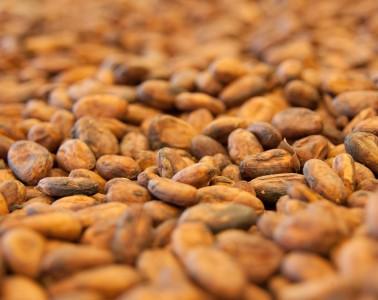 Avant de devenir chocolat, la fève de cacao subit de nombreuses transformations.