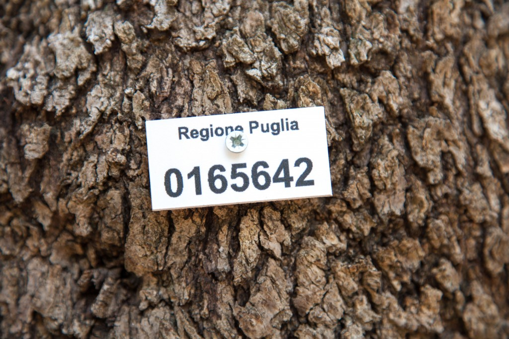 _MG_6782-pouilles-italie-puglia-copyright-maeva-destombes