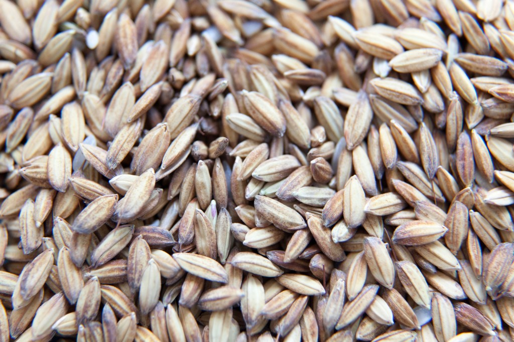 riz-po-piemont-riziere-cereale-italie-rice-copyright-maeva-destombes_MG_7059