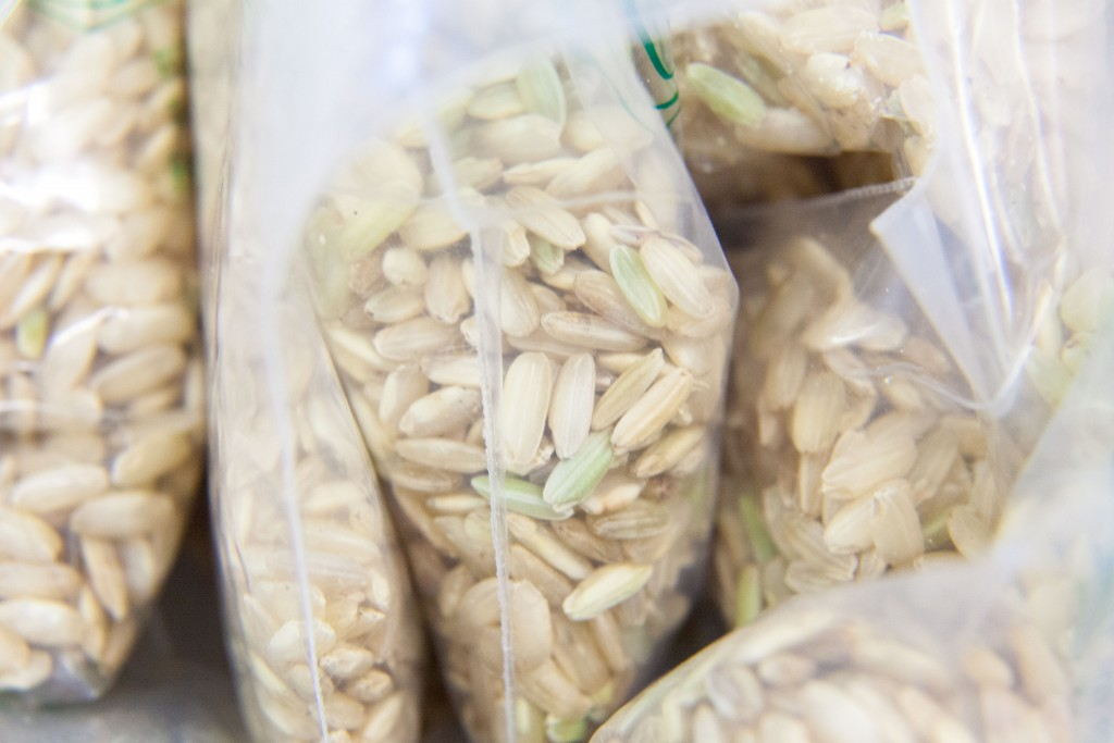 riz-po-piemont-riziere-cereale-italie-rice-copyright-maeva-destombes_MG_7096