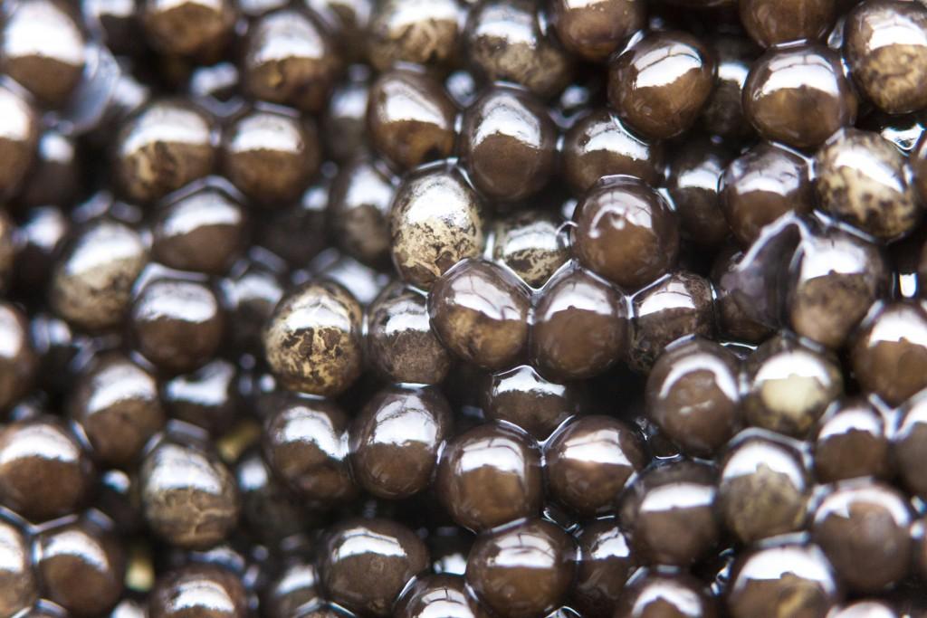 caviar-akitania-aquitaine-sturgeon-copyright-maeva-destombes-8500
