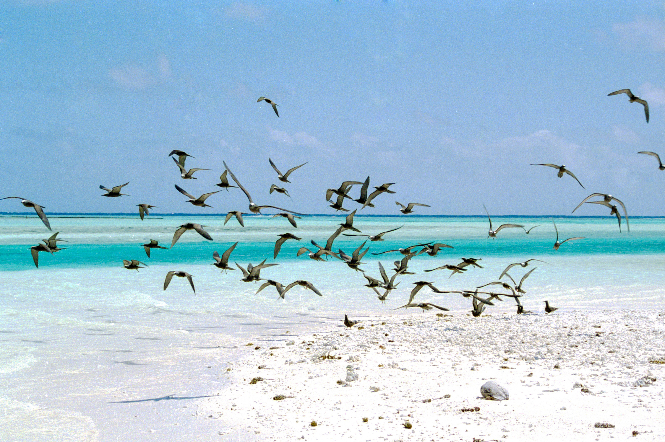 polynesie-francaise-tahiti-pacifique-copyright-maeva-destombes-tetiaroa-2016-10-29-0003