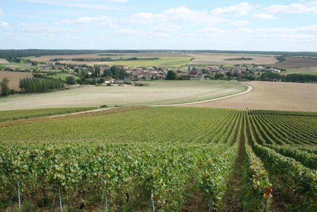 Copyright Maeva Destombes Aube Champagne IMG 6173