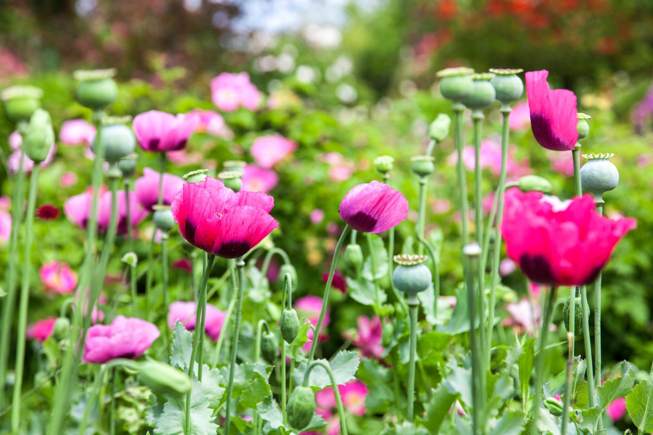 Les jardins de la fondation claude monet giverny d lices for Le jardin des fleurs talence