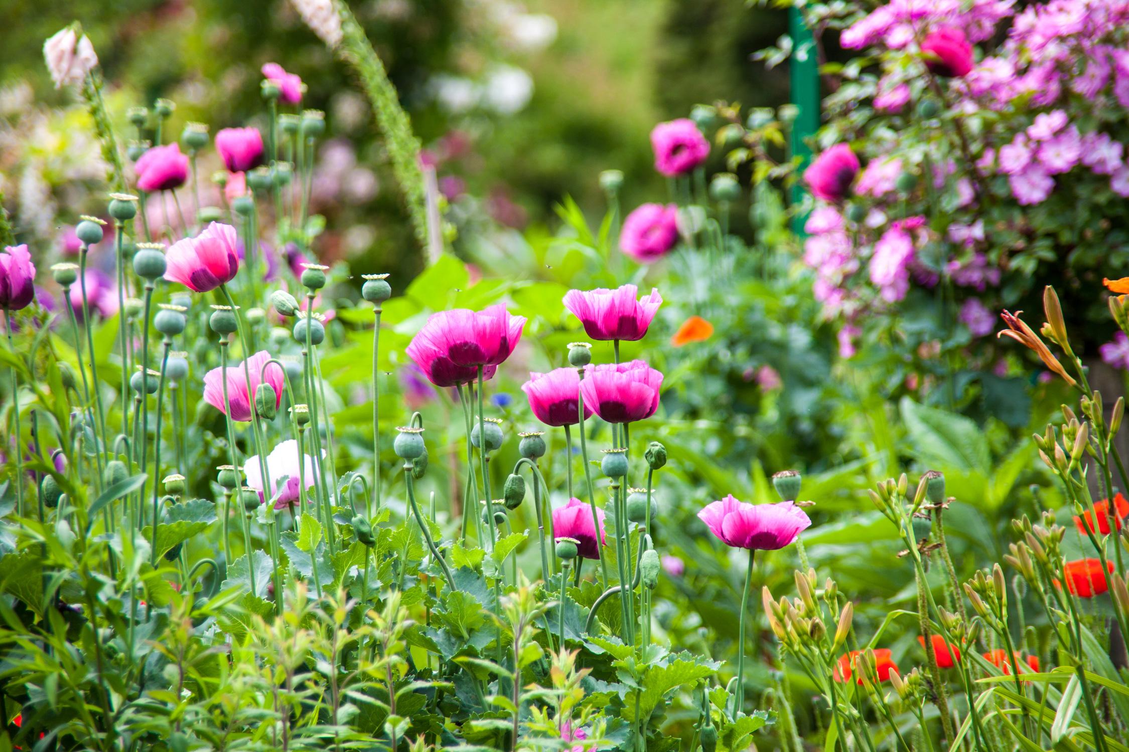 Les jardins de la Fondation Claude Monet  Giverny Délices